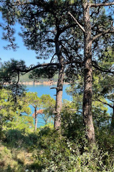 Utsikt fra Burgazada i Istanbul mot sjøen, med furutrær i forgrunnen som delvis blokkerer utsikten